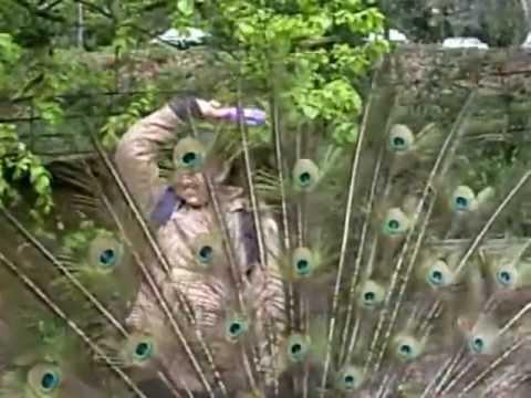Nach Re Mora नाच रे मोरा..original-asha-gdmadgulkar-pldeshpande-devbappa-a Tribute video