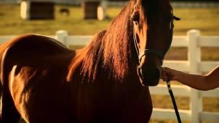 A Horse Called Bear Movie Trailer June 2014