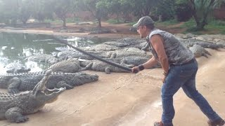 14000 Nile Crocodiles On One Farm ( Croc Capture )