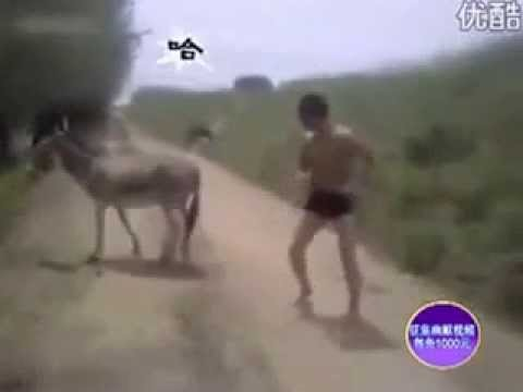 معركة بين انسان و حمار مضحكة جدا جدا