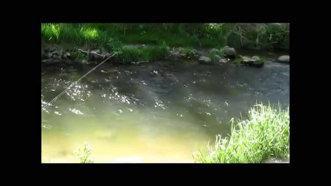 Spring branch creek iowa fly fishing youtube for Iowa out of state fishing license