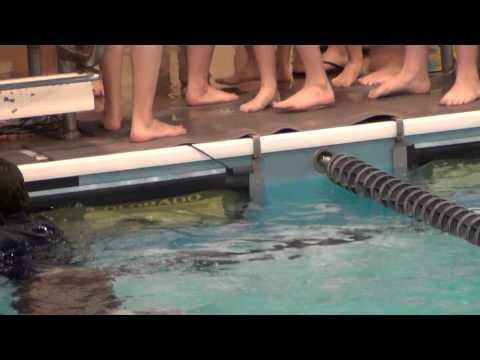 Louisville Swim Team Tradition