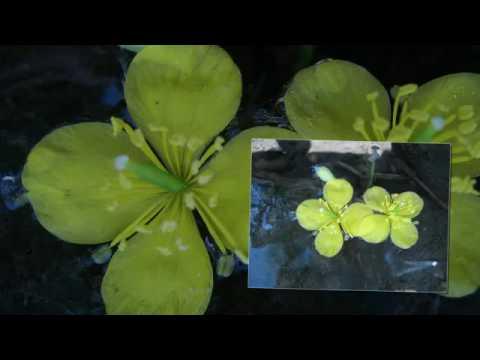 Enya  -  Flora' s Secret