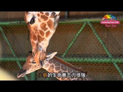 台灣-臺北市立動物園