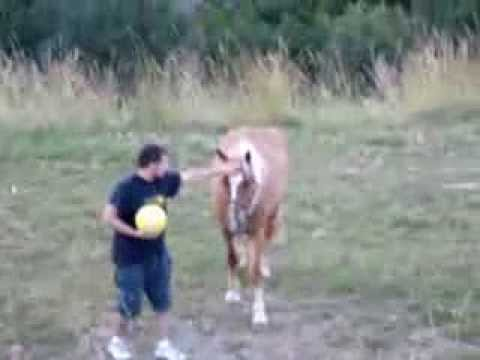 Cicciolino E Il Cavallo (denis Gotti ) video
