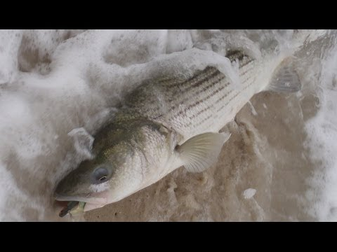 Surf Fishing for Stripers - The Beach Lip