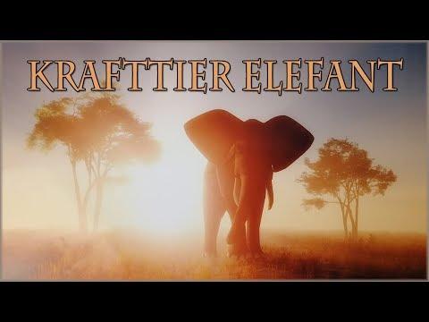 Hast du den Elefant als Krafttier?