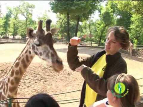 Kalandjárat a Nyíregyházi Állatparkban (2009)