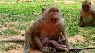 Popeye Feeling Need Sleeping But Can't Sleep Coz Baby Polino | Polino feeding Well