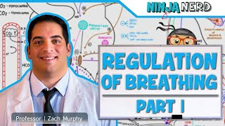 Respiratory   Regulation of Breathing: Respiratory Centers   Part 1