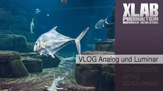 Analog Shooting und Luminar Tutorial VLOG