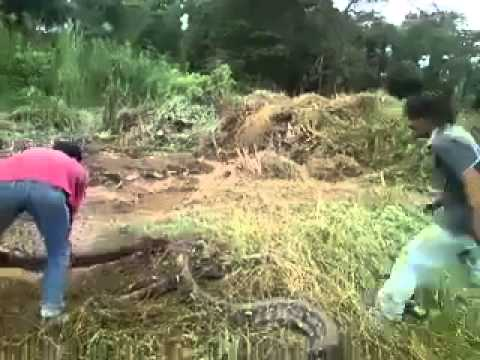 the snake is very big big by_simpleng girl