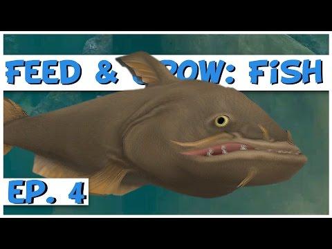 Feed And Grow Fish Ep 4 Level 50 Giant Catfish