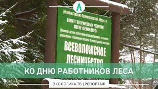 Ко дню работников леса