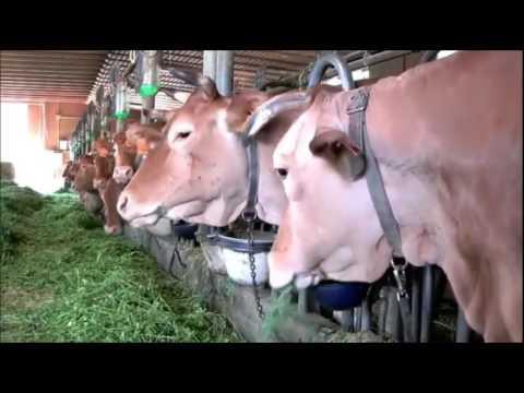 Молочная ферма - Семейный бизнес | Опыт Италии