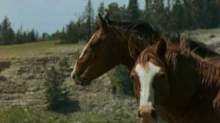 Тег лошади