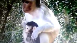 Amazing video for monkey lovers part-2 || kids entertainment*