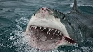 25 Facts About Sharks: Terrors Of The Ocean