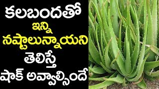 కలబంద వల్ల కలిగే నష్టాలు తెలిస్తే || Aloe Vera Side Effects #Diabetes Telugu