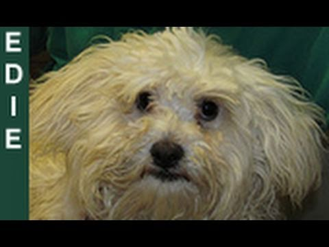0 Lacys Tale: An Adorable Pooch Saved from Euthanasia   Please Share This Video