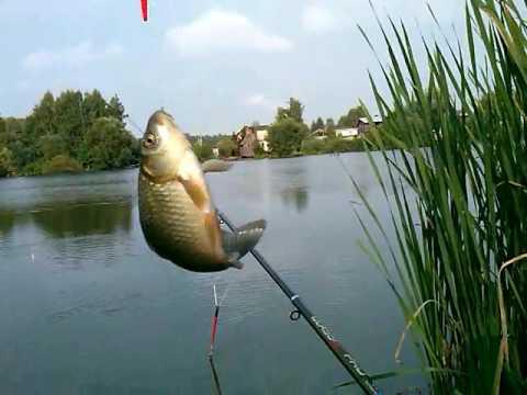 клевые места для рыбалки на клязьме