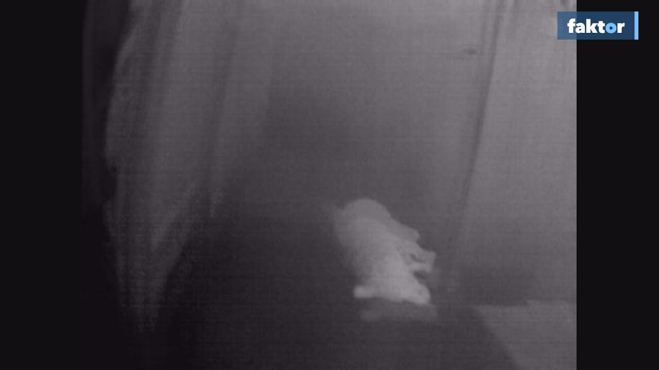 Ájult kiskutyát mentettek a lakástűzből - videó!
