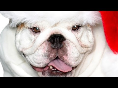 Watch A Bulldog for Christmas (2014) Online Free Putlocker
