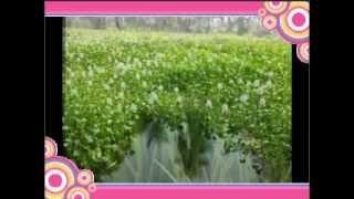 download lagu Merupula..merisaavu..valapulaa gratis