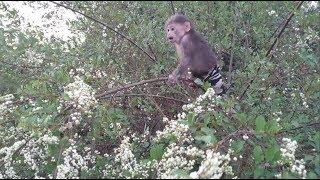 Baby Monkey   Doo Eats Forest Fruits - Funny Animals
