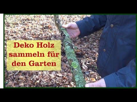 Dekomaterial (Holz) sammeln für den Garten