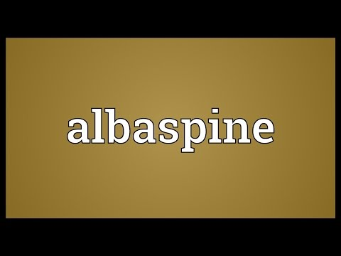 Header of Albaspine
