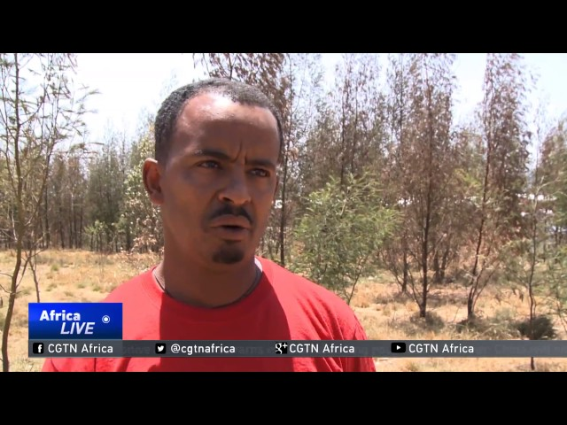 Residents of Koshe dumpsite reluctant to leave despite tragedy