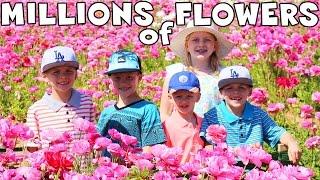 Giant Flower Maze