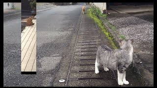 Cats with dinner at different times 時間帯をずらして食事をする猫たち