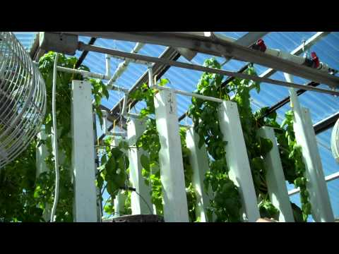 UW grad student's hydroponic tower system grows lots of veggies
