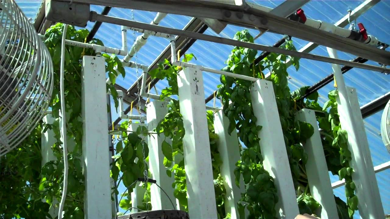 Uw grad student 39 s hydroponic tower system grows lots of for Best fish for hydroponics