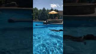 Dogs of instagram  black dog sits blue pool floatie and other dog jumps at him