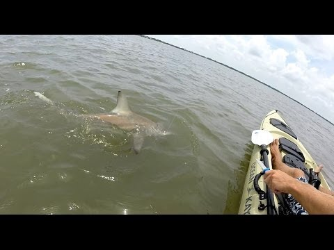 Kayak Shark Fishing- 5ft Blacktip Shark