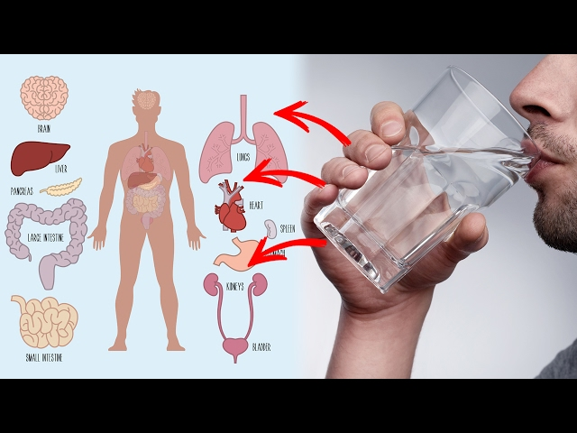 10 Health Benefits of Drinking Warm Water