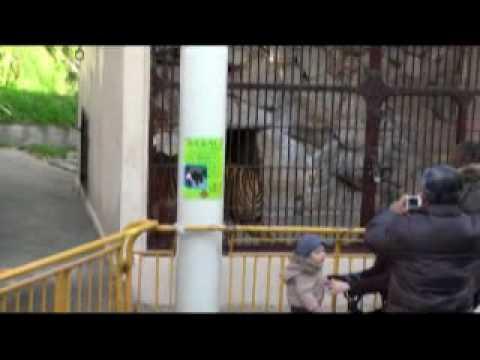 ライオン 池田動物園 岡山市北区