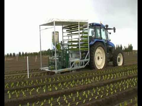 Transplant Systems Australia: Vegetable Transplanting can be fun