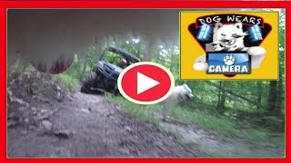 Dog Wears Camera | Free Ranging Filmed by Princess | Husky Dog | Pet Camera | Kids Entertainment
