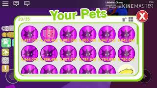 Playing hide and go seek in pet sim!