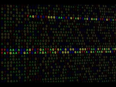 Evolution: Genetic Evidence - Transposons