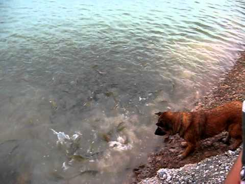 น้องหมาอยากเล่นกับปลา