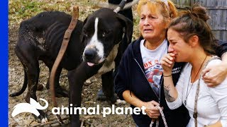 38 Dogs Saved From Horrific Conditions | Pit Bulls & Parolees