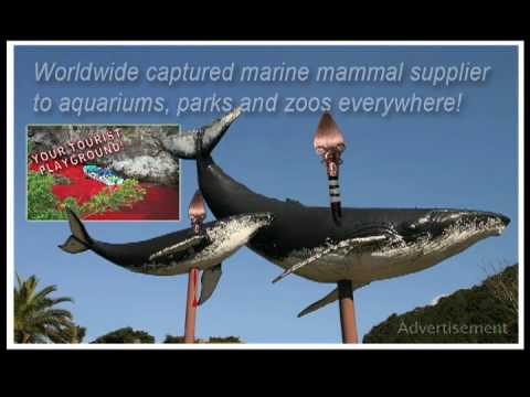 TAIJI THE ULTIMATE SEAWORLD FANTASY (TM)