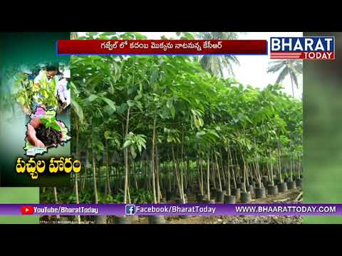 4th Phase Of Haritha Haram in Gajwel Live | CM KCR | Bharat Today