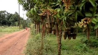 Alo R Alo Diya | Mita Chatterjee | Video songs