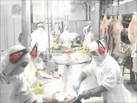 Alto índice de doenças relacionadas ao trabalho em frigoríficos preocupa setor - CNTA